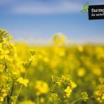 Portraits, Imagebilder & Produkte für Farmgoodies